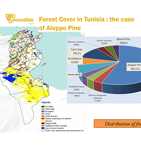 Pine forests in Tunisia – an opportunity for local employment in resin production?